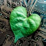Folha verde em formato de coração