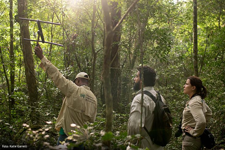Imagem da bióloga Gabriela Rezende e outros pesquisadores na floresta