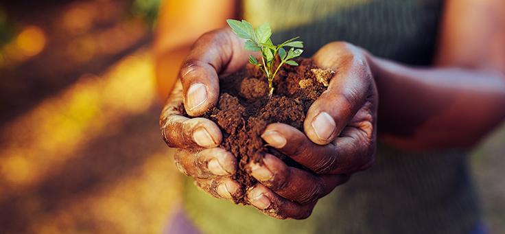 Imagem mostra duas mãos juntas em forma de concha segurando uma muda de planta com terra