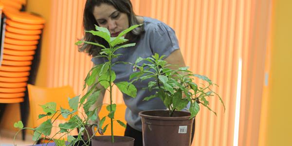 Mulher está em pé em frente a mesa com mudas de plantas em atividade na Associação Colorindo a Vida durante a Semana dos Voluntários.