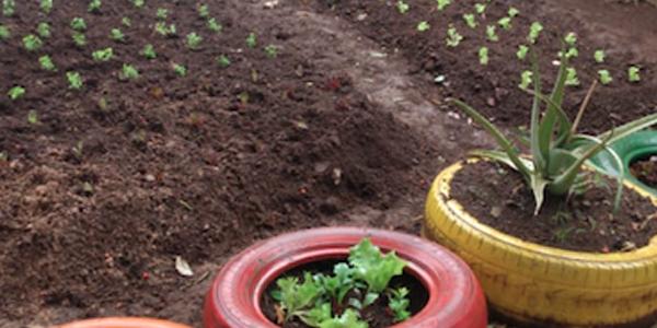Imagem mostra horta produzida em atividade na Casa do Vovô Nestor durante a Semana dos Voluntários.
