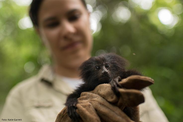 Imagem da bióloga Gabriela Rezende com o mico-leão-preto