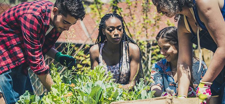Imagem mostra um grupo de pessoas manuseando uma horta