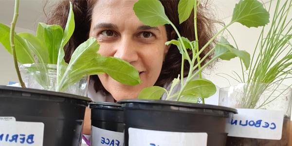 Rosto de mulher está encoberto por mudas de plantas em atividade na Casa do Vovô Nestor durante a Semana dos Voluntários.