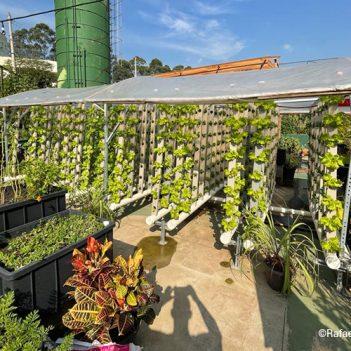 A imagem mostra a horta comunitária de Paraisópolis, já com muitos vegetais e hortaliças para serem colhidas.